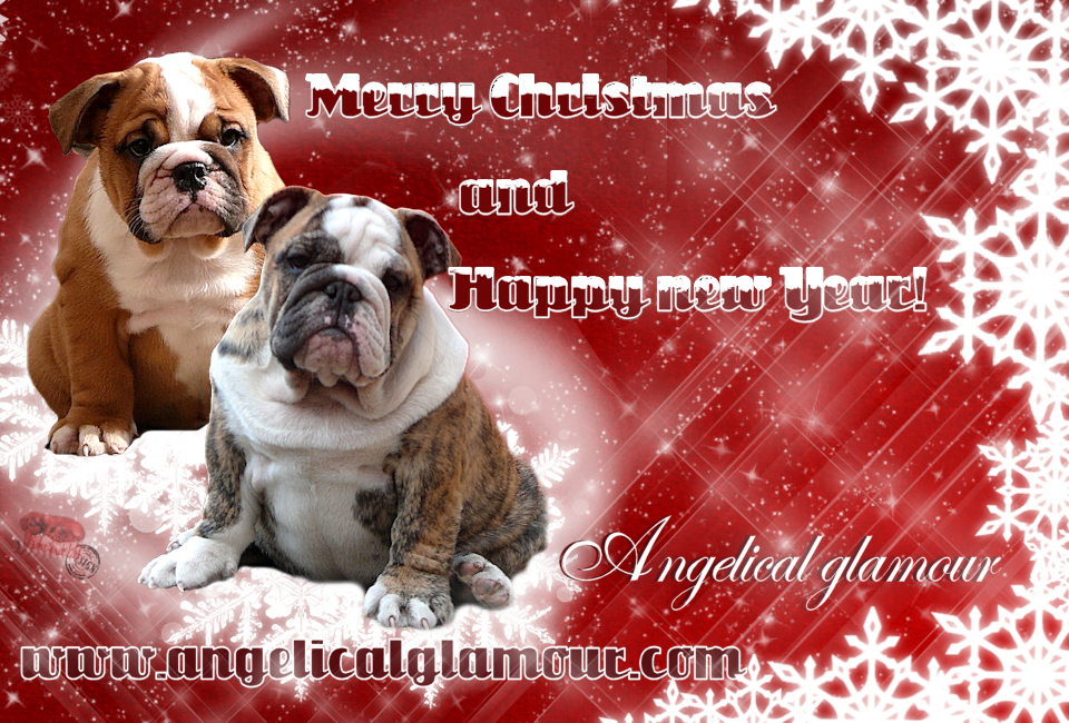 angelical_glamour_bulldogs_pf